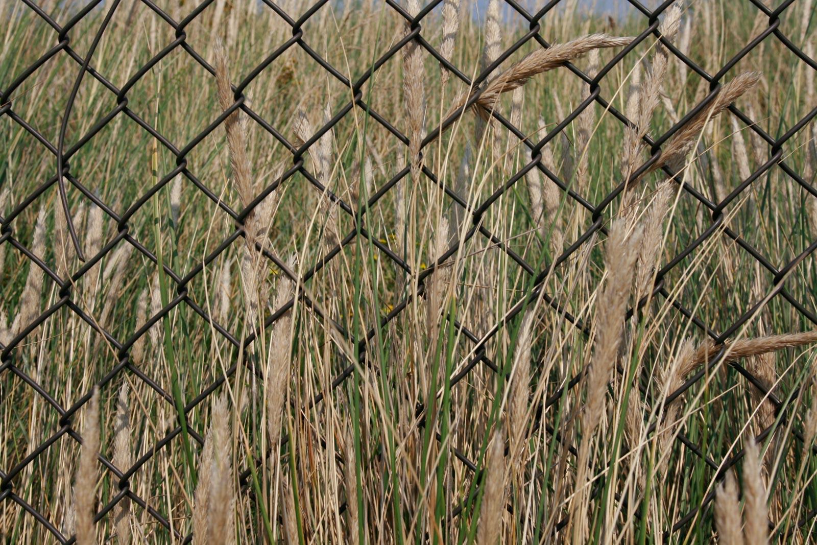 Gras groeit door hek