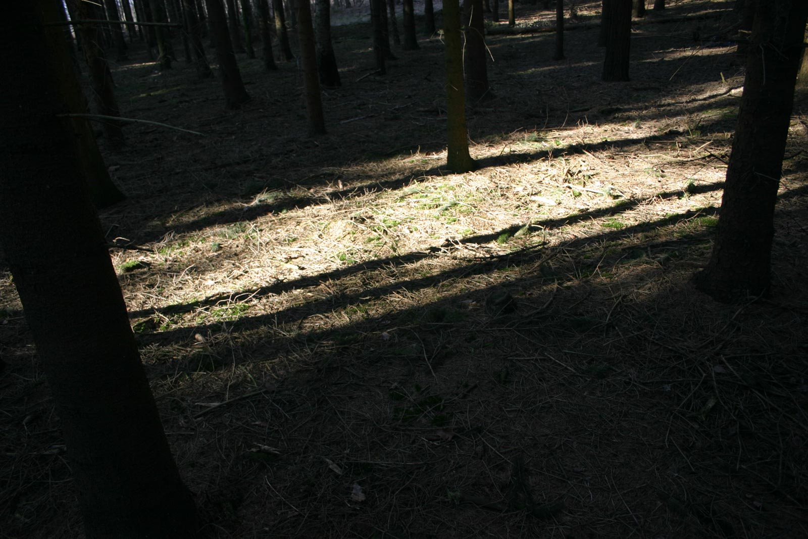 Schaduw in zon in het bos